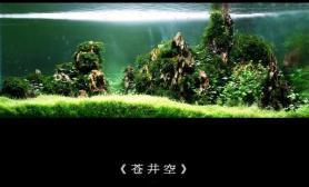《苍井空》《松岛枫》——by自鱼自乐