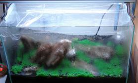 水草缸造景沉木水草泥化妆砂青龙石60CM尺寸设计32