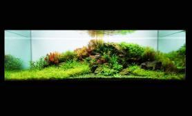 沉木青龙石水草造景150CM及以上尺寸设计26