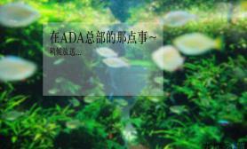 水族箱造景在墨田水族馆的那点事~~~4米巨型水槽造景(2012图片10图片28)