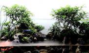 """水草造景""""天然公园""""水陆微景观"""