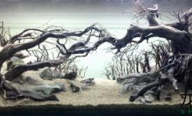 沉木骨架欣赏水草缸灵感借鉴鱼缸水族箱