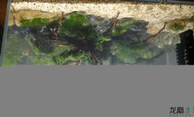 鱼缸造景新手造缸水草缸求点评