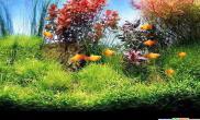 摆个水族大鱼缸优雅隔断美景游动(图)