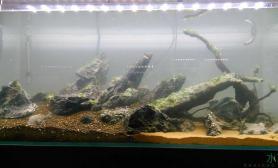 120刚摆个骨架水草缸专家给提提意见沉木杜鹃根青龙石水草泥搭配什么草