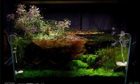 清新水上叶造景水草缸美感十足鱼缸水族箱