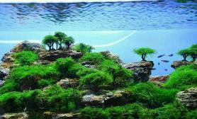 灌木丛林造景第2梯队欣赏