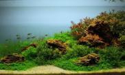 小缸小清新经典水草造景