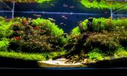 雨林水陆生态缸28