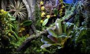 雨林水陆生态缸迷你积水凤梨