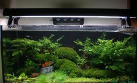 水草之巅迎新冬我喜欢的水草缸