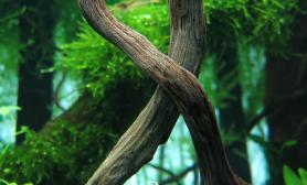 《婆罗州》水草缸造景沉木青龙石90CM尺寸设计《森》