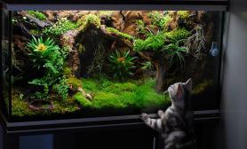 雨林水陆生态缸还有猫咪
