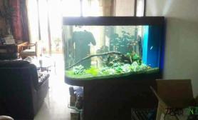 旧鱼缸造新水草景后第9天水草缸放鱼和虾了