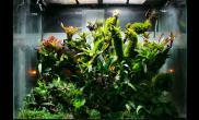 雨林水陆洋兰石斛红白网纹黑珍珠蕨类苔藓类积水凤梨生态缸