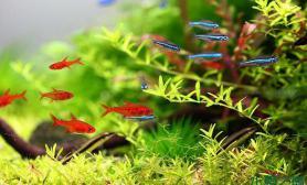 水草造景守望岸上的红衣女子---水草造景
