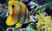 饲养观赏鱼的五大理由