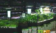 养殖草缸的必要条件