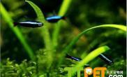 导致鱼缸水变绿的常见原因
