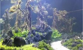 魔幻水陆缸是怎么炼成的?