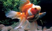 如何辨认鱼儿的饥饱