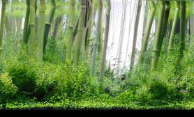 水草缸竹林设计造景沉木水草泥化妆砂青龙石