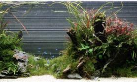 水草缸造景沉木狂野水草泥化妆砂青龙石打底150CM及以上尺寸设计
