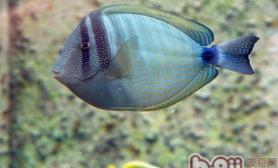 如何给热带鱼换水的具体方法