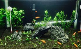 下水5个月新开一缸水草缸欢迎点评