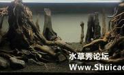 水草造景《寻踪》-杨雨帆作品