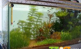 水草缸欣赏