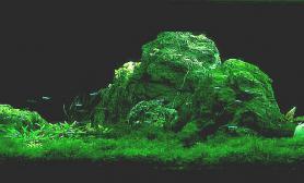 一钵千家饭水草缸孤身万里游沉木杜鹃根青龙石水草泥