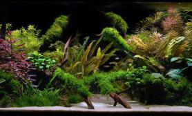 水草缸造景沉木水草泥化妆砂青龙石150CM及以上尺寸设计22