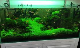 这梦寐已求的状态水草缸准备翻缸重来水草缸加油