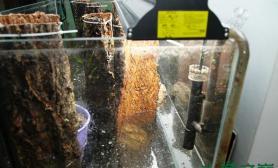 水草之巅迎新冬-水草缸大师级别水草缸在缸中植树造林鱼缸水族箱