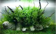 水草造景晒晒我的黑木蕨水草缸