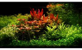 Aquascape of the Month -