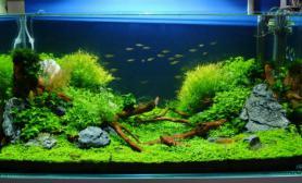 水草缸造景沉木水草泥化妆砂青龙石90CM尺寸设计68