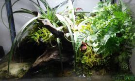 我的水路小螃蟹缸