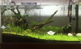 水草造景新手开缸水草缸红绿宫庭长的慢水草缸已经20天了