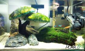 水草造景新手 莫丝树 1个月 求教怎么样能让莫丝长的快啊