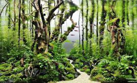 水草缸造景沉木水草泥化妆砂青龙石60CM尺寸设计55