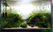 水草情缘水草缸没鱼陪衬哪里来的生机与活力