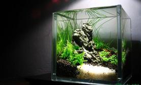 水草造景【Kaiser】【分享】早期 10x10x10 微缸造景 ~~~各位渔友分享~~~~~5P~~