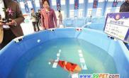 观赏鱼博物馆最美锦鲤价达50万(图)