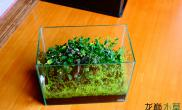 给大家推荐一些漂亮的草缸鱼缸水族箱