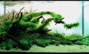 水草缸造景沉木水草泥化妆砂青龙石90CM尺寸设计46