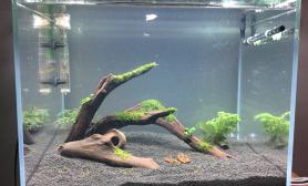 试用app水草缸昨晚新开的缸沉木杜鹃根青龙石水草泥种些简单的草沉木杜鹃根青龙石水草泥