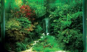 水族箱造景看一眼水草缸就让你终身难忘的美景鱼缸水族箱