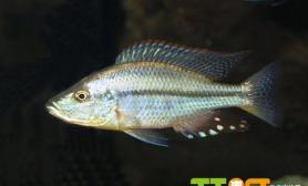 养金鱼用水管理